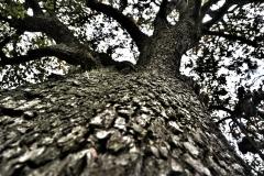 Baum (1)