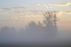 Nebel (2)