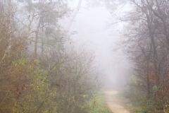 Nebel im Wald (1)