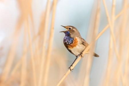 Galerie: Vögel